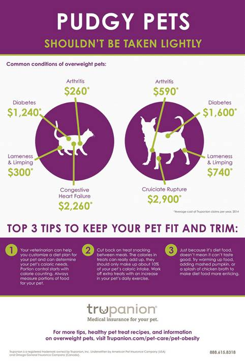 Pet World Insider Guest Article – The Growing Problem of Overweight Pets
