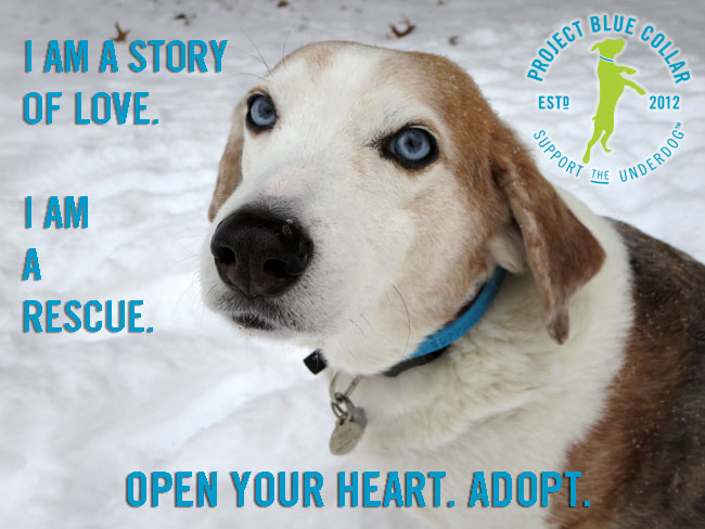 Pet World Insider Guest Article – Project Blue Collar – Tuck – Inspiring Others In To Action